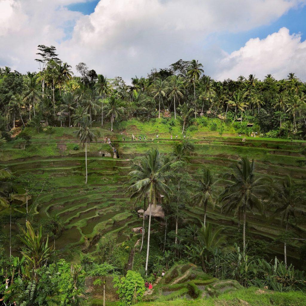 Bali - Tegallalang rice terraces